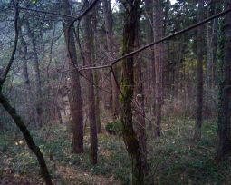 Второй уровень кладбища. Погост так заглушен деревьями и кустарником, что к нему сложно приблизиться.